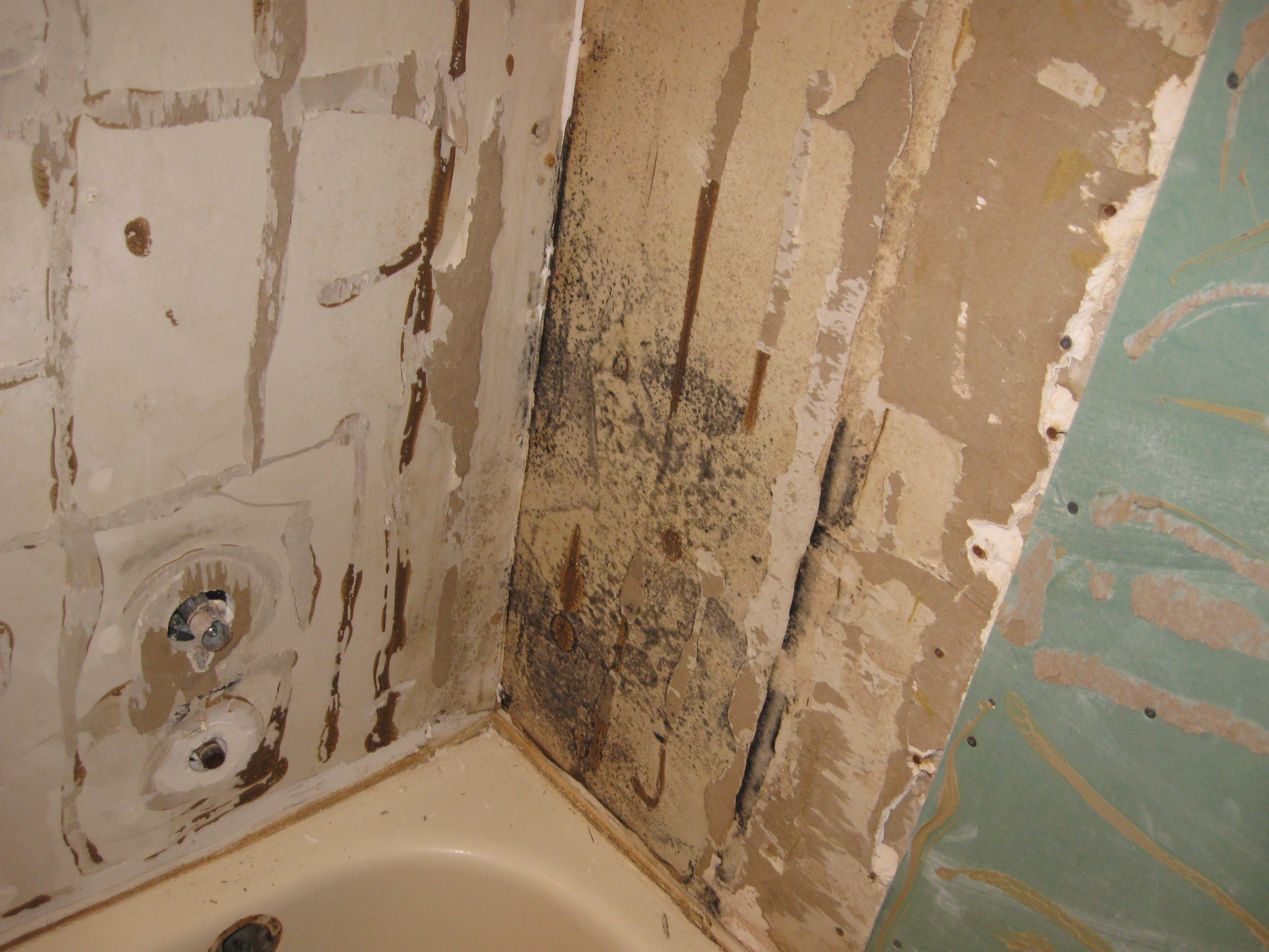 Get The 411 On Bathroom Mold